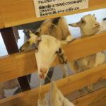 【子連れ】あさイチでも紹介!大都会の牧場で牛を眺めながらソフトクリーム【大手町牧場】
