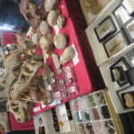 【化石好きは必見】東京ミネラルショー2018で宝探し!鉱物初心者&子どもの楽しみ方とは?